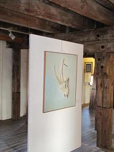 Schädel<br />Öl auf Leinwand  (2008)<br />60 x 70
